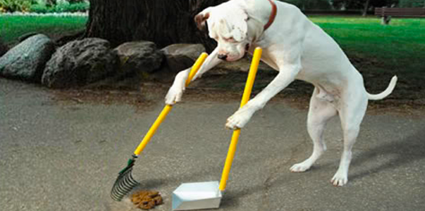 dog-cleaning-up-poop-603x300